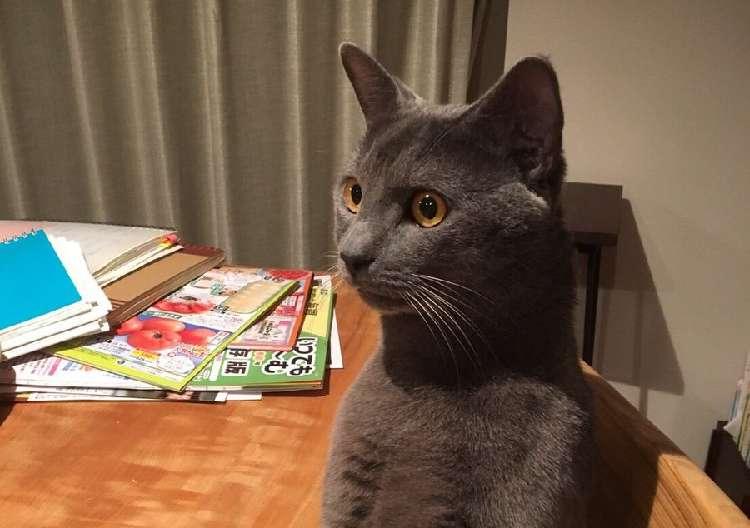 【私は人間である】写真に写る1匹のネコの姿が… どう見ても、自分のことを人間だと思い込んでいた!
