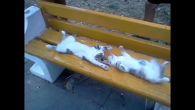 ベンチでものすごい無防備に熟睡しているニャンコ。人が集まってきて、モフモフされてしまう♡