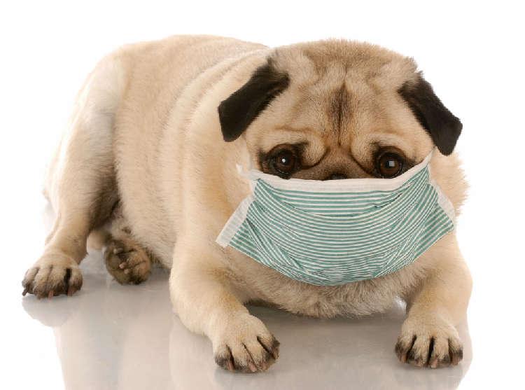 人間だけじゃない!? イヌも花粉症に悩んでいる〜その原因から対策まで〜