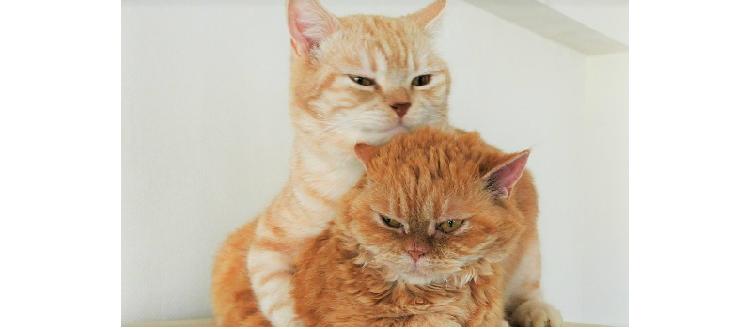 まんまる猫たち! 仲良しな2匹のフォトジェニックな日常に、思わずウットリしてしまう写真集♡ 9枚