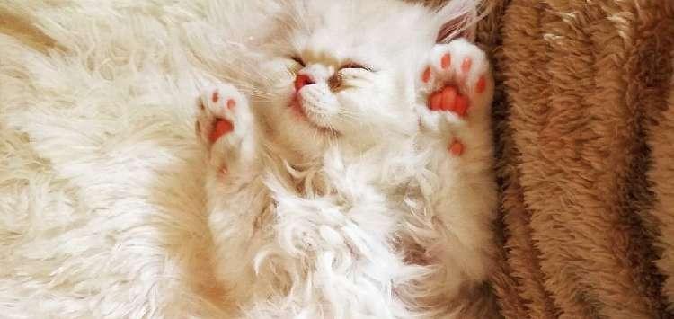 【わたげ猫♡】一緒に暮らす3匹のふわふわ猫たち。思わず、ぎゅっと抱きしめたくなる10枚の写真