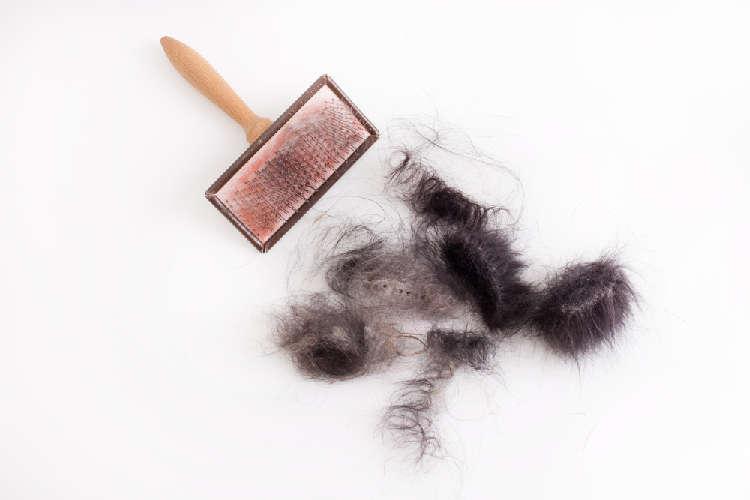 どうにかしたい犬・猫の抜け毛。そのメカニズムと対策を知っておこう!
