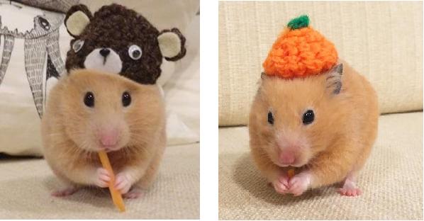 【どんな帽子も似合っちゃう…♪】ぴったりサイズの帽子を、ちょこんと被ったハムスターたち♡ 9枚