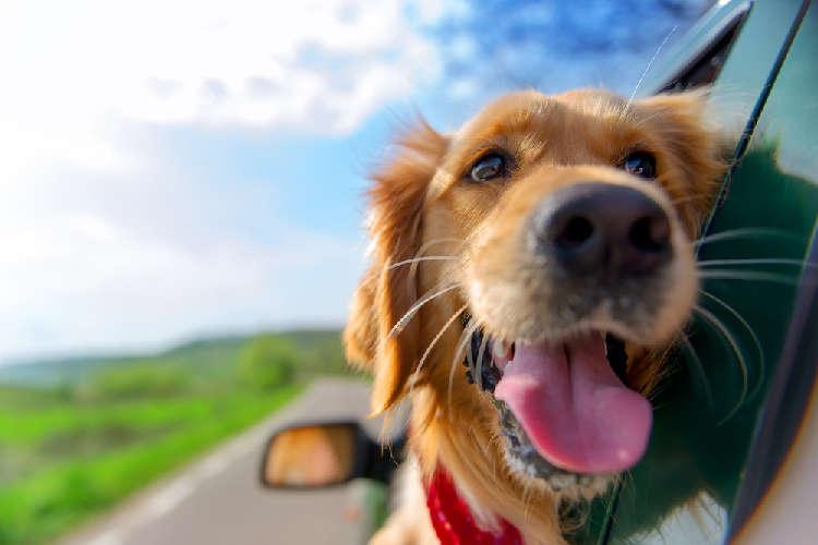 愛犬も一緒に楽しくおでかけ! ペットと泊まれる、関東近郊のこだわり宿