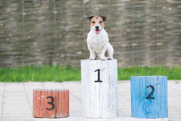 6年連続1位の名前って? これから飼うという人は必見! 犬の名前「人気ランキング」