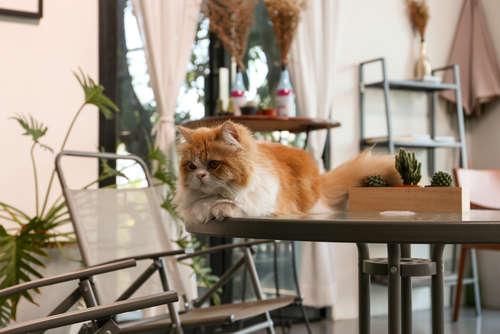 猫に会いに行くだけで猫のレスキューに繋がる「保護猫カフェ」に行ってみよう!