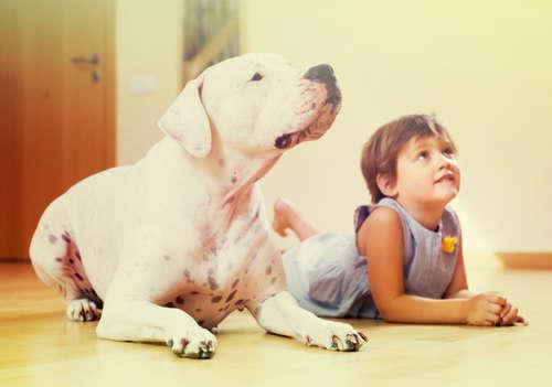 犬が人間と暮らすようになった歴史