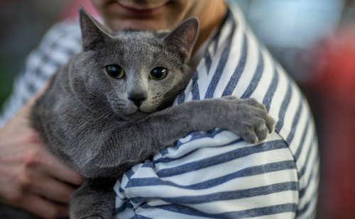 【猫の飼い方】猫を飼うのって、どうしたらいいの?どんな生活になるの?
