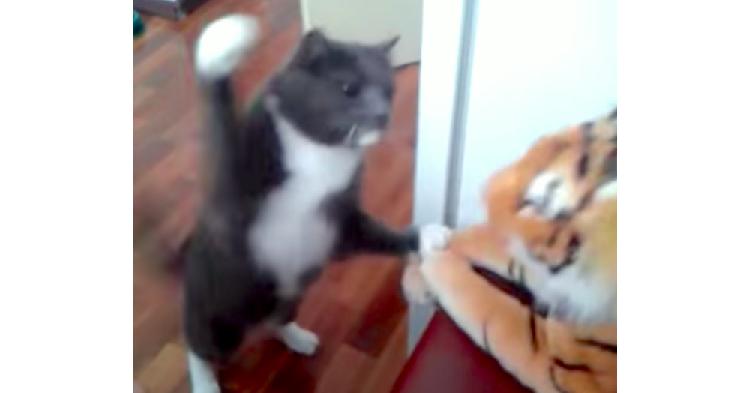 ニャンコの本気の猫パンチ…。ぬいぐるみを叩いて音がするぐらい強烈な一撃が決まった(ΦωΦ)