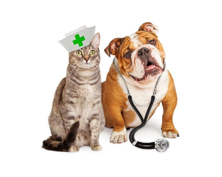 """【獣医師監修】""""犬""""や""""猫""""の健康診断って必要なの? 受ける年齢や頻度、費用は?【基礎編】"""