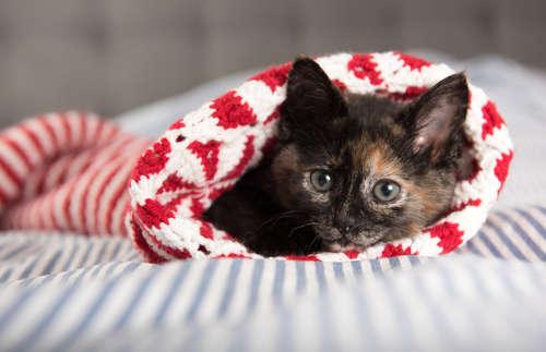 猫の里親になる方法。里親募集している猫カフェも。