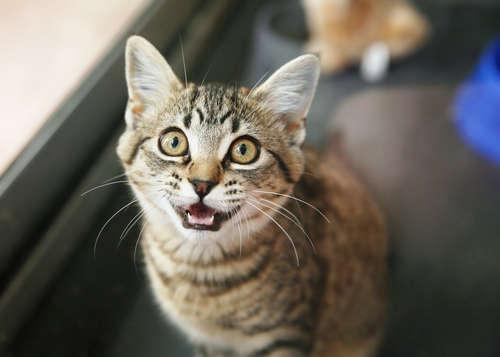 猫の鳴き声の意味が知りたい! 「ニャー!」からつかむ猫の気持ち。
