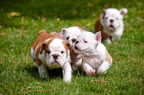 【名付けのヒント集】犬へ初めてのプレゼント、名前を付ける