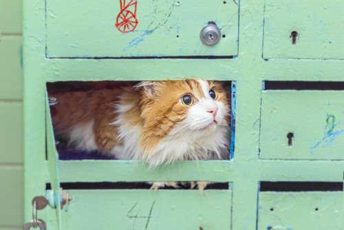 2/15~ 小さくてかわいい! 作家が描く「猫切手」展