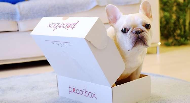 "≪PECOBOX8月号・〆切迫る!≫皆さんの ""喜びの声"" たーっくさん届いてます(´▽`*)♪"