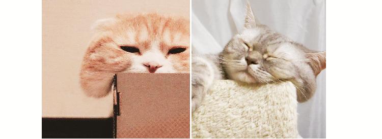 """【こぼれホッペ♡】思わずムニムニしたくなる、ネコたちの """"もちもち頬"""" あつめました!(10枚)"""