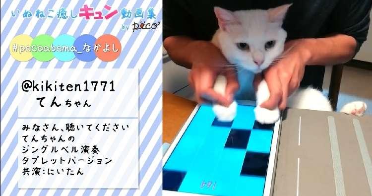 【癒しのキュン画像集】みんなの自慢のペットちゃん☆【AbemaTV】