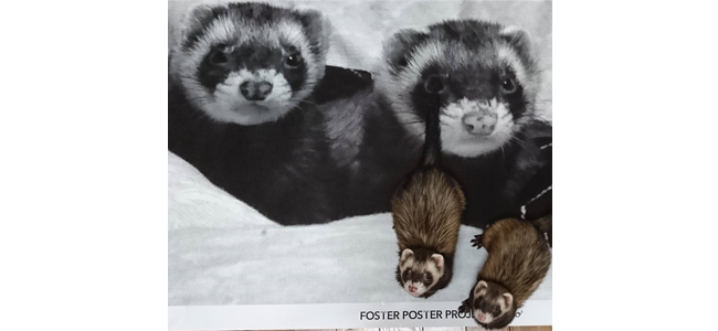 PECOポスターは、プレゼントにもぴったり♪ 大切な記念日に贈って、幸せを広めちゃおう♡