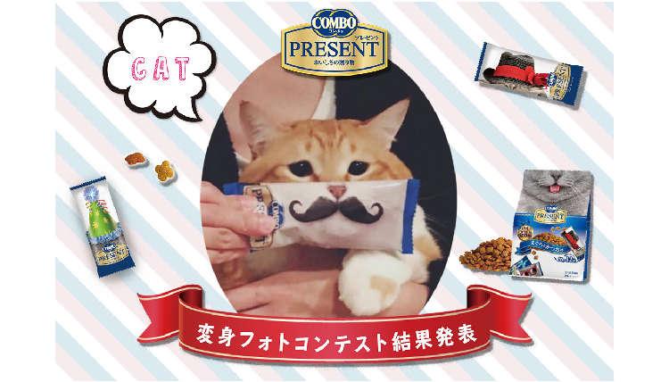 キャットフードのパッケージで猫ちゃん大変身!?コンボ プレゼント変身フォトコンテストの入賞者発表♡
