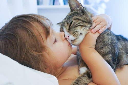 猫の飼い方【初級編】~はじめて猫を飼う前に知っておくこと~