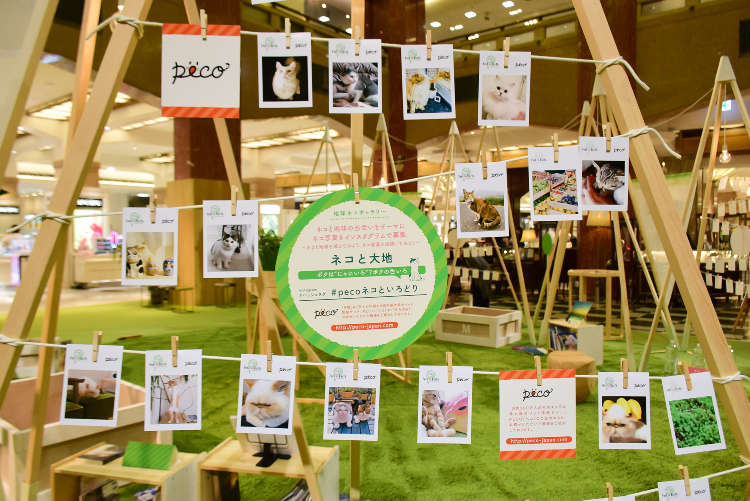 【5/9〜5/17】日本橋三越本店にて「Feel so Earth 今日は、ネコになろう」開催!