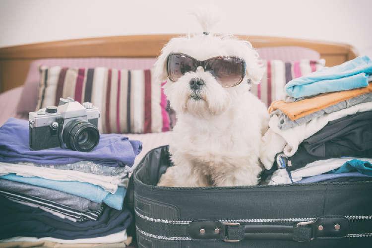 知っているようで、意外に知らない!? 犬と旅行するときのルール&マナー