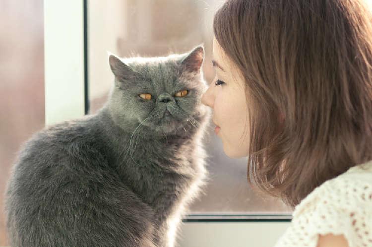 今からでも間に合う! あなたの愛猫を少しでも人慣れさせるためのコツ