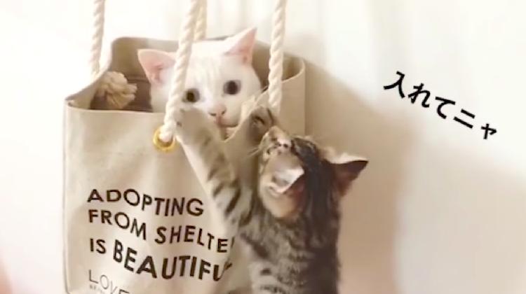 【一緒がいいの!】バッグに入りたい子猫のお願い。それに対するニャンコの反応は…(*ノωノ)♡