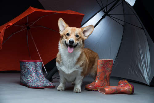 ジメジメした季節も楽しくのりきる! 梅雨時期の犬のストレス発散法