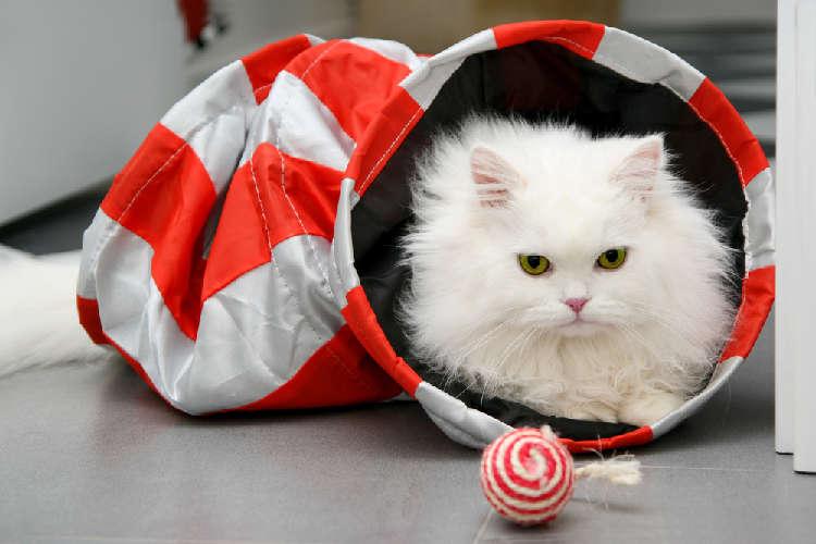 猫にも飼い主にも優しい&楽しい! 今、注目のグッズを紹介♪