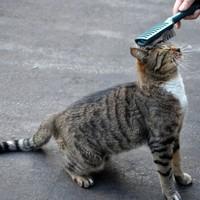 毛艶を美しく保つために! 欠かさずやってあげたい猫のブラッシング