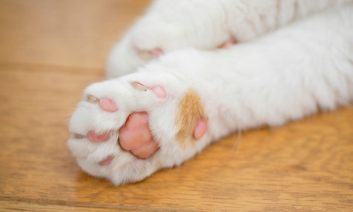 猫の爪について【まとめ】