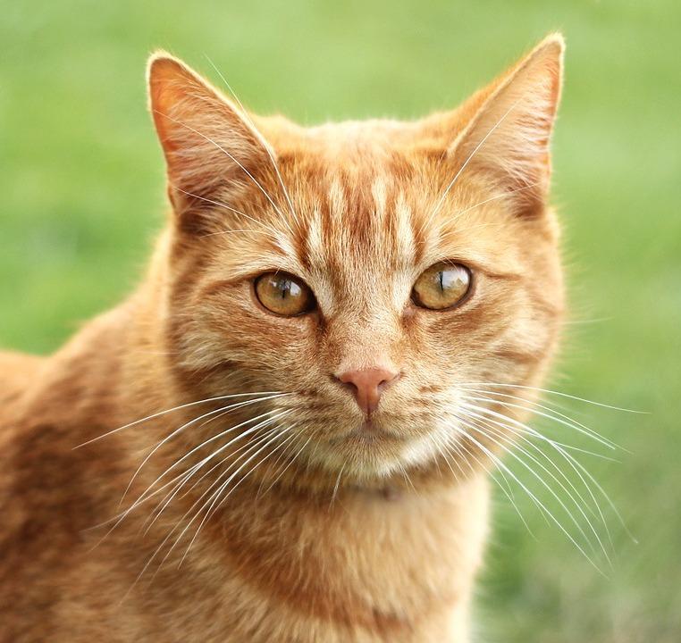 【猫のしつけ】 基本的な方法
