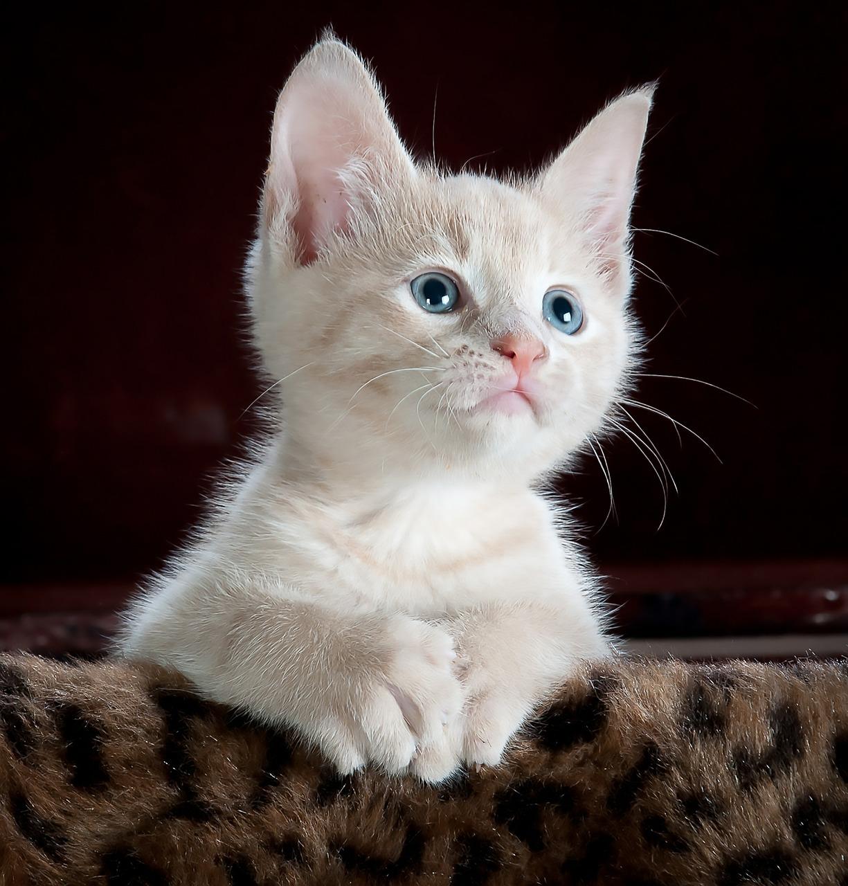 【猫のしつけ】  名前を覚えさせるにはどうすればいいの?