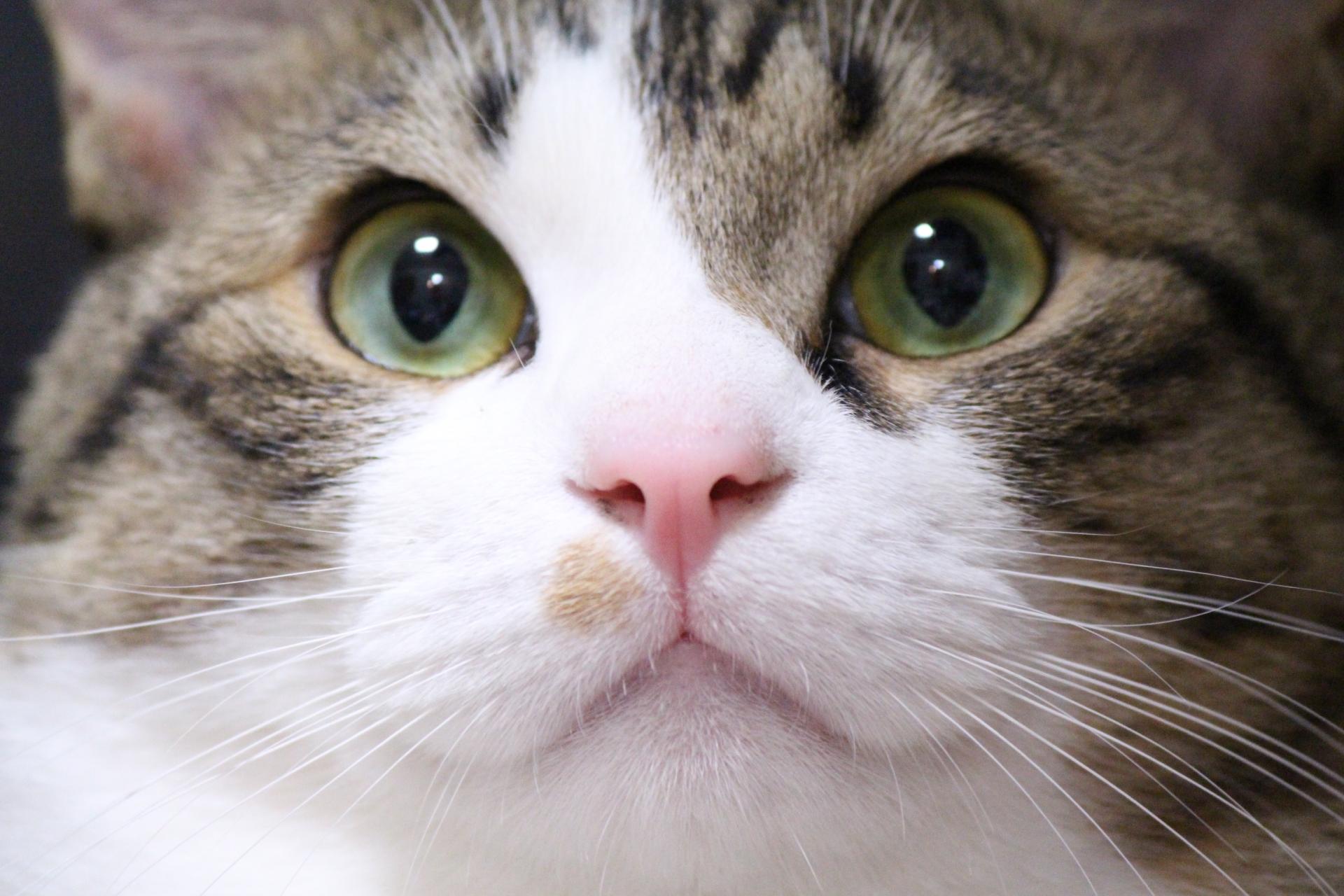 【猫のしつけ】 爪とぎをやめさせることはできるの?