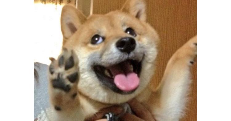 """【ネットが騒然】ある一匹の柴犬が見せた驚異の変顔。もはや """"奇跡の一枚"""" だった…!"""