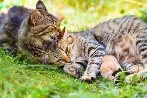 猫の出産について。 準備や産後の注意点とケアについて