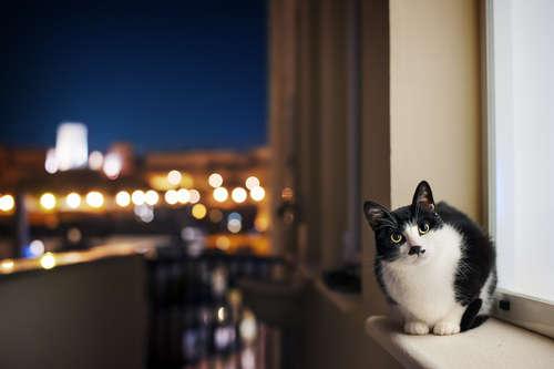 【獣医師監修】猫は夜行性? 夜中に猫が活動する理由と対策