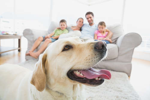 犬の寿命ってどれくらい? 長生きしてもらうためには