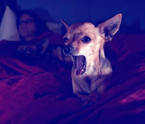 犬が夜鳴きをする! 夜鳴きの理由とその対策について