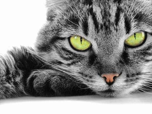 猫の目の不思議。 知っておきたい状態やサインなど