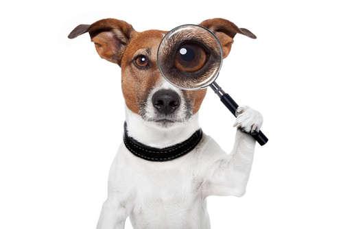 【獣医師監修】犬の血液型について。 特徴や種類から輸血時の注意まで