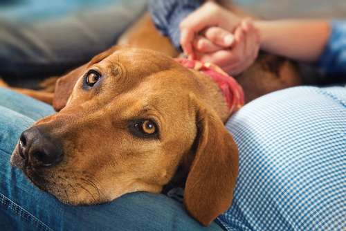 こんなときは犬のストレスサイン? 行動から読み取るストレスと、疾患について