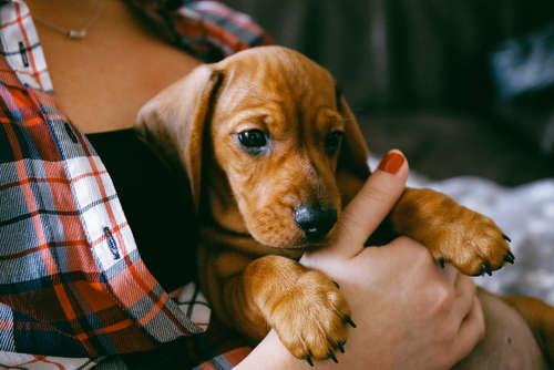 犬の爪切り、しないとどうなる? 爪切りの頻度とやり方