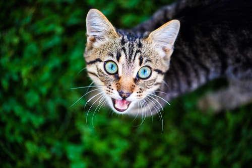 【獣医師監修】猫の鳴き声に込められたサインとは? 鳴き声から猫の気持ちを読み取る