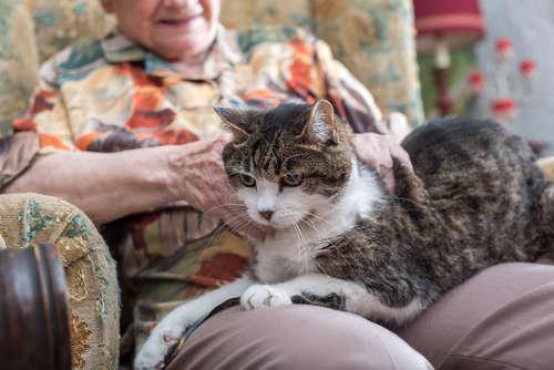 【獣医師監修】猫の寿命ってどれくらい? 長生きしてもらうための対策について