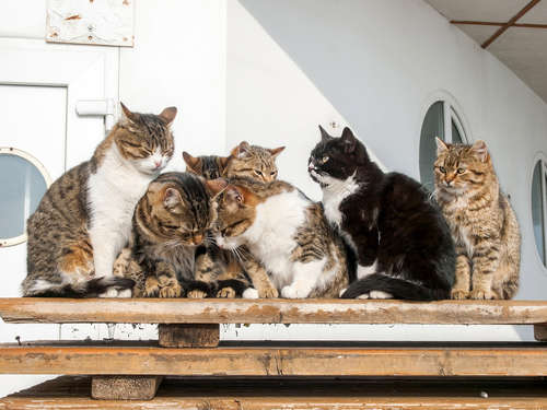 猫の柄・模様の種類を紹介! 柄・模様と性格の関係は?