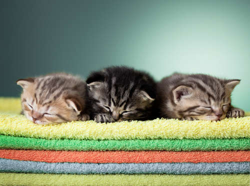 猫の睡眠時間ってどれくらい? 年齢とも関係があるのでしょうか