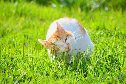 猫が猫草を食べる理由とは? 与え方の注意点