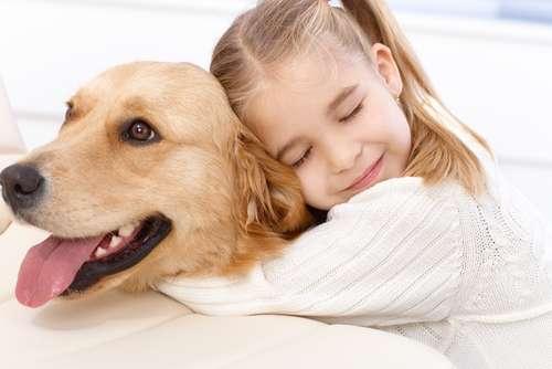 犬のがん 考えられる原因や症状、治療法と予防法
